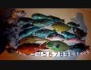 【魚突き】奄美大島 コウイカ タコ ブダイ 2020年5月11日