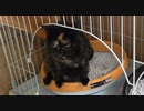 【閲覧注意】猫のトイレを二個置いたら大小分けるのか?