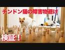 オッドアイの珍獣(猫)、障害物よけで猫能力測定に挑む