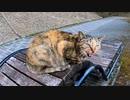 遊歩道を歩いていると野良猫に呼び止められたので隣に座ってナデナデしてきた