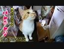 なぜ猫は魚を見ると可愛いパンチングをするのでしょうか…家猫になって初めての魚「イワシ」その1