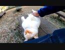 ベンチに野良猫がいたので隣に座ってナデナデしたら喜んでゴロンゴロン転がった