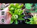 【ぴ】春の山菜フキノトウとツワブキを食べる。きゃらぶき ふきみそ 田舎暮らし 自給自足