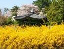 【朝鮮音楽】花咲く春 꽃피는 이 봄날에【普天堡電子楽団版】