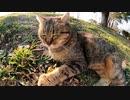 公園で寝ていた猫に近寄ってみるとモフられに起きてきた