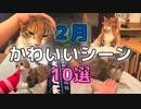 【2月ベスト】キジ三毛猫の面白・かわいい動画集10選【2021/2】【第4回】