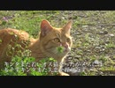 【猫】キンタ負けるな