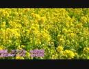 菜の花畑・鳥の声サンプル