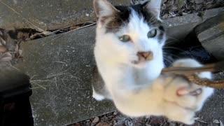 【やめて~!】猫にストラップが襲われる。。。
