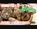 保護した野良猫が、猛スピードで先住猫に距離を詰めていった。果たして受け入れられたのか!?