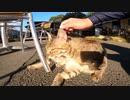野良猫がコロナで客足の減ったカフェで招き猫の仕事をしていた