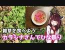 【思い切って野草を食べてみよう】#5 カラシナさんでちらし寿司!