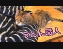 うどん職人な猫の朝は早い【ドキュメンタリー風】