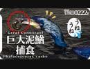 0222B【巨大ドジョウを鳥が捕食】カワウ潜水狩り。魚がハクセキレイに食べられる。コサギ捕食。ヒメリュウキンカ、クロッカス、クリスマスローズ #身近な生き物語 #ドジョウ #カワウ