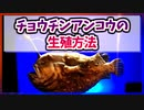 【ゆっくり解説】チョウチンアンコウの生殖方法【今日の豆知識】