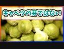 【ゆっくり解説】芽キャベツはキャベツの芽ではない【今日の豆知識】