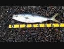 サーフの魔王 K浜メジロ 2021-03-05 03-06