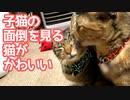 子猫の面倒を見る猫がかわいい