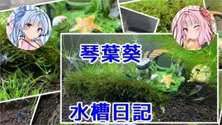 琴葉葵の水槽日記2