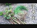 【ぴ】イタドリメンマとノビル料理 春の野草 自給自足 田舎暮らし