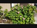 【花】移動中に見つけた花 2021/3/18 ~1~