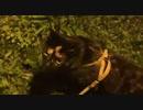 旅先で早朝のあず散歩 もう大変なんです! 道の駅くにの松原 旅猫あずきと車中泊の旅 2021.03.20