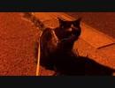 早朝4時に起されて○○を要求される 旅猫あずきと車中泊の旅 桜島編 2021.03.19