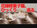 可憐な少女子猫たち、花嫁修業でひっくり返る