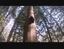 林道を歩いていると、一頭の子熊と出会った。親とはぐれたようで、餌がないのか衰弱していた。頑張れ子熊。