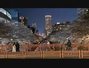2021年03月24日4枠目 目黒川の桜の様子をすこし