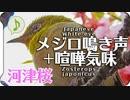 メジロの鳴き声07 喧嘩気味河津桜