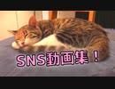 【Twitterで話題⁉】まる猫のSNS動画まとめ!今も昔も変わらぬ可愛さ…!