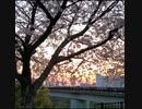 ぼっちがゆく、福岡の公園ぶらり散歩【百年公園】