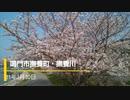 しぃ散歩 鳴門市撫養川・しだれ桜