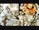 【春のソロ花見】筍と根菜類の煮しめの作り方+ #180