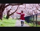 【ももかん】 流星ダイアリー  踊ってみた 【桜の中で】
