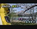 のんびり、カブツー:海津大崎の桜/花見ツーリング