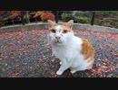 哲学の道で出会った人懐っこい猫が忘れられない