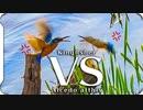 0331B1【カワセミふわふわバトル】小さな猛禽モズ鳴き声。捕食カルガモ。鳩の求愛。スズメ夫婦。鯉の産卵。バン、オオバン。 鶴見川水系恩田川でコンデジ野鳥撮影 #身近な生き物語 #カワセミ #野鳥