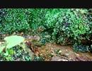 【睡眠用・癒しの自然音】湧き水を眺める動画その2【休憩・リラクゼーション】