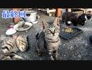 狂暴な野良の子猫がフレンドリーになっていく様子 3【最終回】