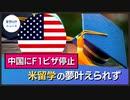 中国に米国F1ビザ停止 留学の夢叶えられず【希望の声ニュース】
