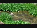 【睡眠用・癒しの自然音】小川を眺める動画【休憩・リラクゼーション】