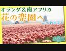 [せかほし] 世界の花のある暮らし | オランダ&南アフリカ | 旅のオトモは鈴木亮平 | NHK