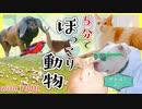 [せかほし] 世界の猫カフェ&ドッグサーフィン   もふもふうさぎ   旅のオトモはJUJU   NHK
