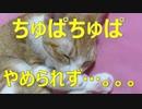 肉球ちゅぱちゅぱを止められない猫。