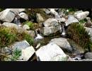 【睡眠用・癒しの自然音】小川を眺める動画2【休憩・リラクゼーション】