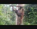 【ニコニコ動画】心の底から笑いたい人へのジャングルを解析してみた