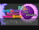 【ゆっくり解説】T細胞の活性化