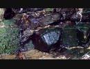 【睡眠用・癒しの自然音】湧き水を眺める動画その4【休憩・リラクゼーション】